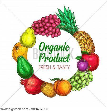 Tropical And Farm Fruits Round Frame. Peach Or Nectarine, Kiwifruit And Apple, Plum, Grape And Pinea