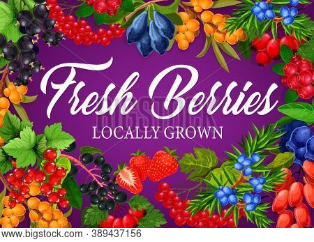 Berry Fruits Poster Of Raspberry, Blackberry And Strawberry, Vector Forest And Farm Food Dessert. Be