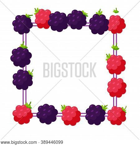 Blackberry And Raspberry Square Frame For Banners And Designs. Border Made Of Berries. Vector Illust