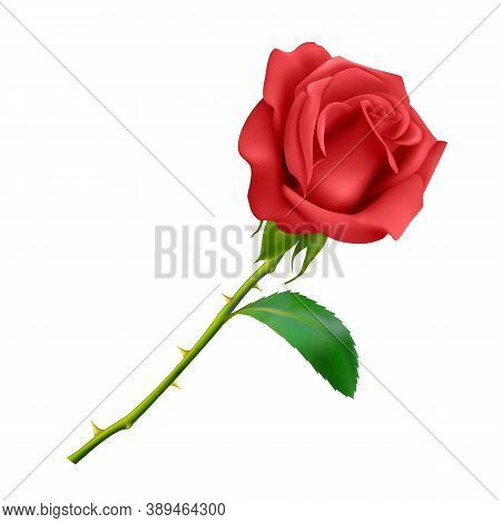 Beautiful Red Rose On Long Stem With Leaf And Thorns Isolated On White Background, Photo Realistic V