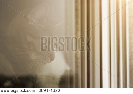 Cat Sits In Front Of Window And Looks Outside. Waiting For Freedom. Photographed From The Outside Wi