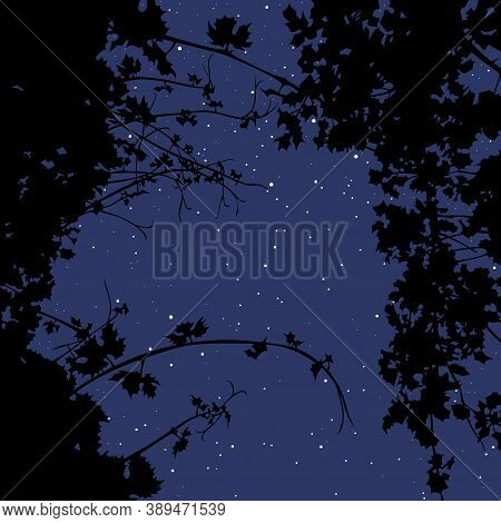 Background Of Night Starry Sky Through Silhouettes Of Plants. Vector Image