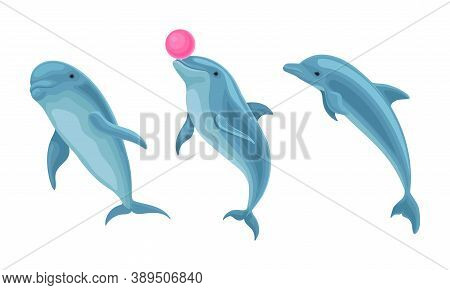 Blue Dolphin As Aquatic Mammal With Streamlined Body And Flippers Vector Set