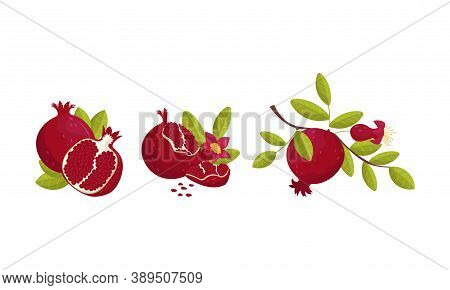 Red-purple Pomegranate Fruit With Outer Husk And Inner Seeds Vector Set