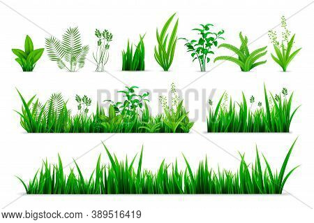 Realistic Spring Grass Set. Collection Of Realism Style Drawn Green Fresh Plants Or Garden Seasonal