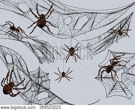 Collection Of Cobweb For Catching Insects. Cobweb And Spiders Isolated On Gray Background. Intricate