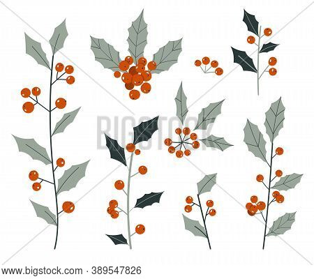 Hand Drawn Decorative Christmas Holly, Plant Branches, Design Element Set. Winter Bouquets. Christma