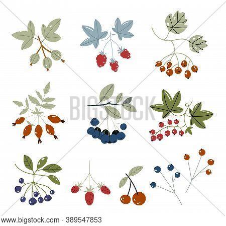 Forest Berries Flat Icons Blueberry, Cranberry, Raspberry, Strawberry, Cherry, Rowan Berry, Blackber