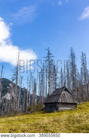 Old Wooden Shepherd's Hut On A Glade In Tatra Mountains, Poland, With Dry Dead Pine Trees And Spruce