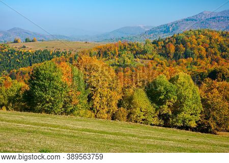 Trees In Colorful Foliage On The Hills. Rolling Countryside Scenery In Autumnal Season. Wonderful Su