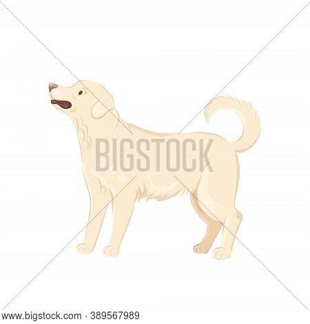 Cute Labrador Dog Vector Illustration. Sand Labrador Clip-art Isolated On White Background.