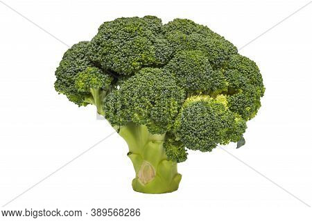 Broccoli Isolated On A White Background. A Branch Of Fresh Green Broccoli. Healthy Food.