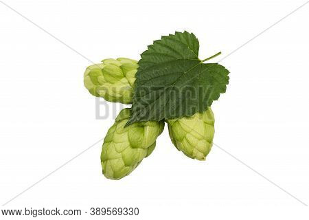 Fresh Green Hop Branch, Isolated On A White Background. Hop Cones For Making Beer And Bread.