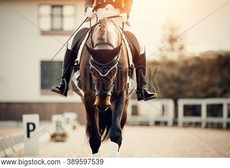 Equestrian Sport. Portrait Of A Dressage Horse In Training, Front View. Sports Stallion In The Bridl