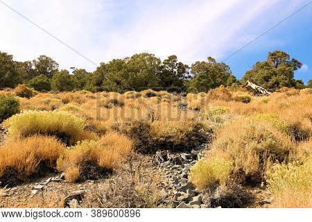 Chaparral And Sage Plants On An Arid Mountain Slope Besides A Pine Forest Taken At The Panamint Rang