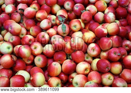 Fresh Picked Red Empire Apples Background In The Harvest Season