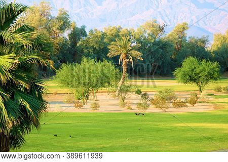 Manicured Grass On A Fairway At A Golf Course Besides A Garden With Chaparral Plants And Palm Trees