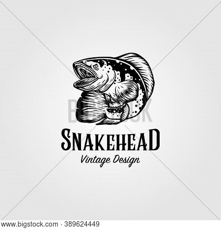 Channa Snakehead Fish Vintage Logo Vector Illustration Design
