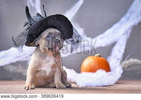Adorable French Bulldog Dog Puppy Dressed Up With Large Halloween Witch Hat In Front Of Seasonal Bac