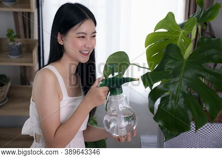 Asian Lady Watering To Monstera Variegated Tree By Spray In Her Room In Her Condominium, This Image
