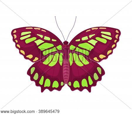 Fluttering Tropical Butterfly With Brightly Coloured Wings Vector Illustration