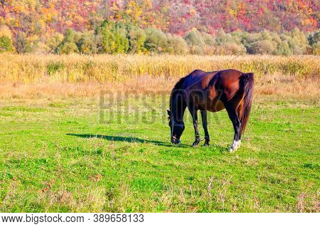 Brown Horse At Pastureland In The Fall Season