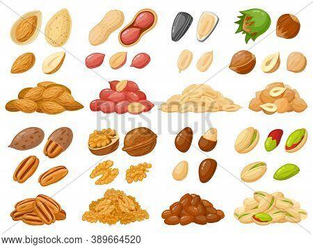 Cartoon Nuts. Almond, Peanut, Cashew, Hazelnut Nuts, Sunflower Seed And Pistachio, Nut Food Isolated