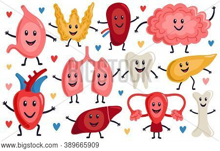 Cute Internal Organs. Healthy Funny Heart, Stomach, Lungs And Brain, Medicine Human Organs Character