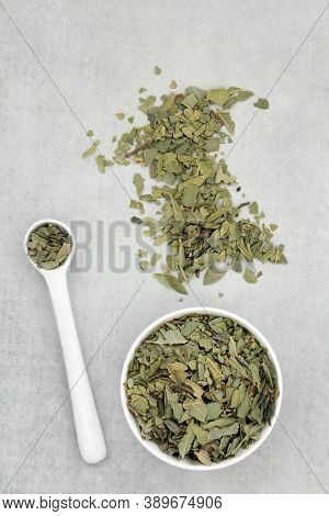 Boldo herb leaves used in herbal medicine for gallstones, rheumatism, bladder infections, gonorrhea, liver disease, is anti bacterial and can reduce anxiety. On grunge background. Peumus boldo.