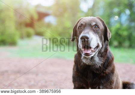 Pet Animal Dog. Dog On Street. Close Up Of Animal Dog. Dog. City Life Of Beautiful Dog