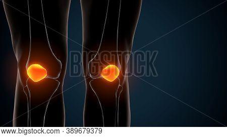 3d Illustration Of Human Skeleton Knee Joint Anatomy