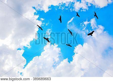 Eagles Flying In Sky In Sun Beams