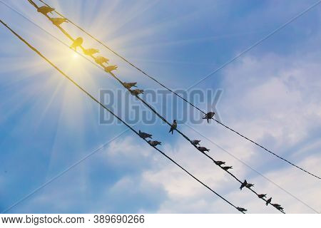Group Pigeons On Wire Against Solar Sky Photo