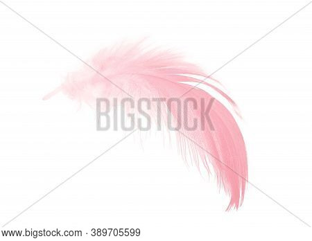 Coral Pink Soft Feather On White Background