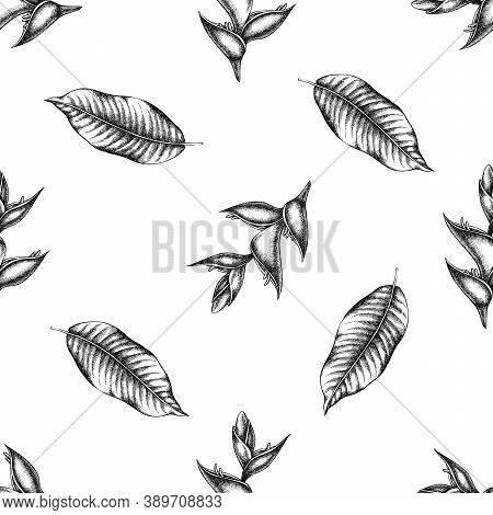 Seamless Pattern With Black And White Heliconia Stock Illustration