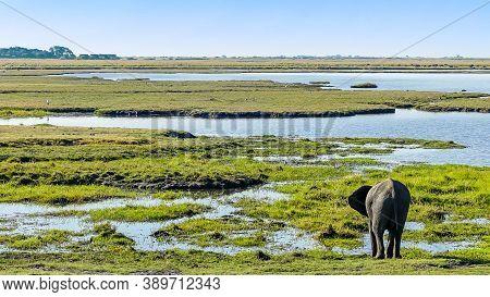 Lone Elephant Drinking Water At The Okavango Delta Grasslands In Botswana On Safari, Luxury Travel,