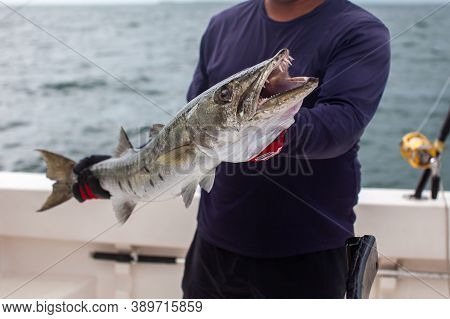 A Fishing Charter Guide Holds Up A Barracuda From A Boat In Varadero, Cuba On A Day Excursion Deep S