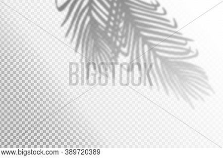 Vector Illustration Of Realistic Tropical Shadow Overlay Effect. Blurred Transparent Soft Light Shad