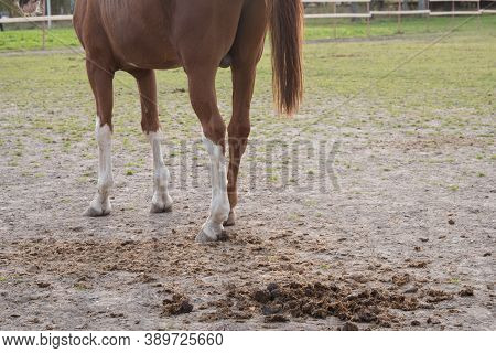 Horse Manure Close-up. Concept. Manure On The Background Of The Horses.