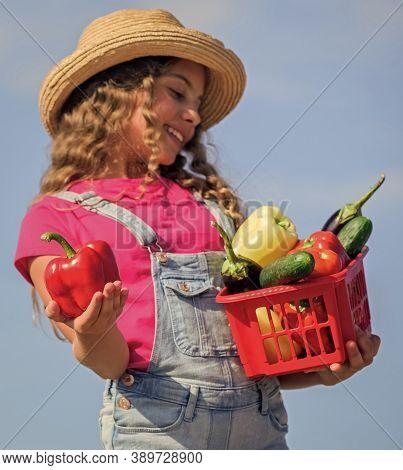 Crops Harvest. Harvest Season. Natural Vitamin Nutrition. Child Carry Harvest Sky Background. Homegr