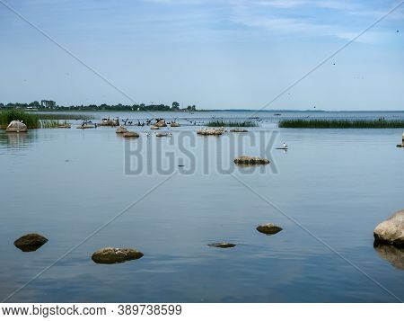 Flocks Of Waterfowl, Gulls And Cormorants In The Reservoir,