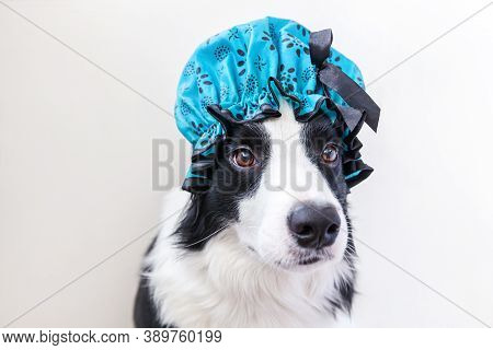 Funny Studio Portrait Of Cute Puppy Dog Border Collie Wearing Shower Cap Isolated On White Backgroun
