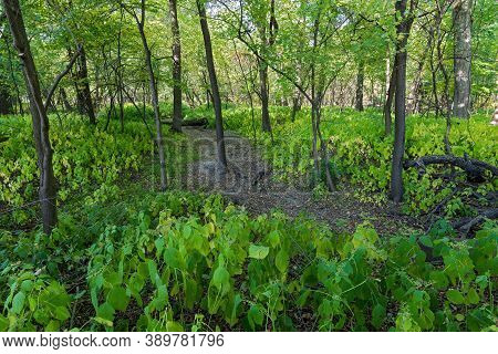Trail Through Forest Of Fort Snelling State Park Minnesota
