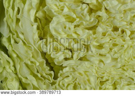 Abstract Natural Background.beautiful Slice Of Chinese Cabbage. Natural Textured Light Green Backgro