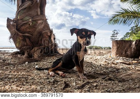 Pet Dog On The Street. Black, Brown And White Dog. Dog In The Garden Or In The Park. Dog Portrait