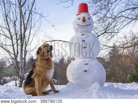 Snowman And Furry Dog Under A Blue Sky On A Winter Day