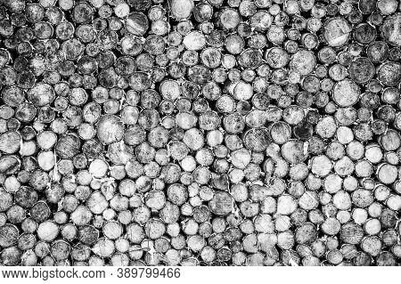 Tree Stumps Background. Pieces Of Teak Wood Stump Background. Round Teak Wood Stump. Black And White