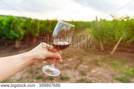 Glass Of Red Wine Against The Vineyard. A Woman Tasting Red Wine, Vineyard On Background. Copy Space
