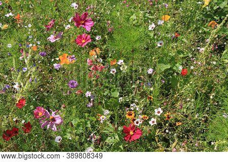 Nice Meadow Flowers Texture