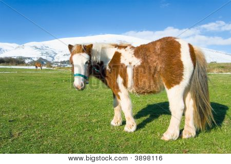 Pony In High Place Campoo